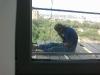 za-oknom