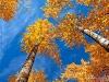 autumn_0